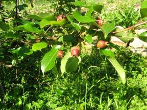 april fruits 004